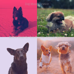 Mellow Music for Cute Puppies - Acoustic Guitars