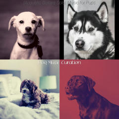 (Acoustic Guitars Solo) Music for Pups