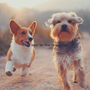 Acoustic Guitars Solo (Music for Lonely Dogs)