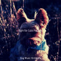 Bgm for Cute Puppies